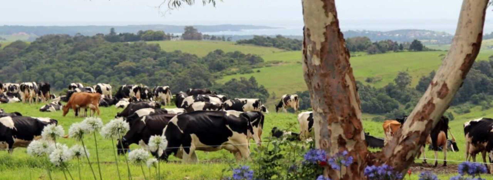 Dairy Jobs